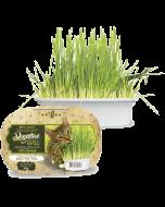 Graminha para Gatos Digestive Grass