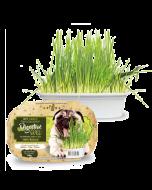 Graminha para Cães Digestive Grass